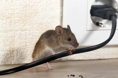 Pest Control in Woolwich, SE18. Call Now! 020 8166 9746