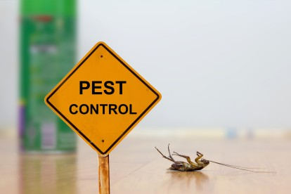 Pest Contol in Woolwich, SE18. Call Now 020 8166 9746